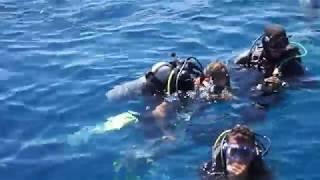 Дайвинг в Красном море  Египет 2014