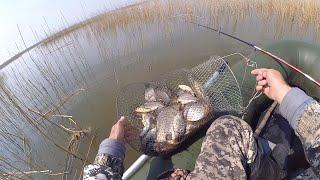 Ловля карася весной в камышах Рыбалка в мае на поплавок
