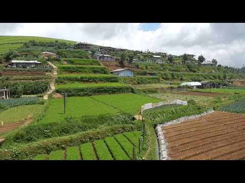 Sri Lanka,ශ්‍රී ලංකා,Ceylon,Nuwara Eliya Vegetables Plantatations