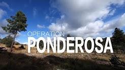 Restoring the Ponderosa Pines