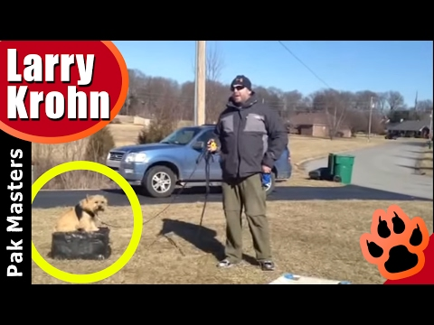 Training Little and or Fearful Dogs with Pak Masters of Nashville/Bowling Green
