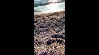 Морской прибой. Самое теплое море.