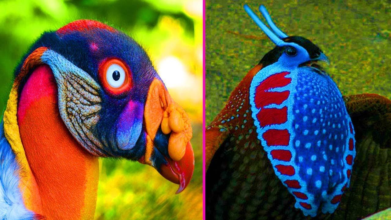 10من أجمل وأبهى أنواع الطيور في العالم (الجزء الأول)