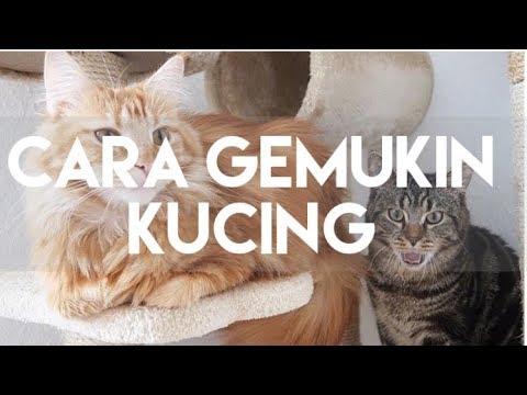 CARA GEMUKIN KUCING | MY CATS DIARY #16