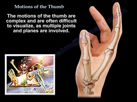 Motions Of The Thumb - Everything You Need To Know - Dr Nabil