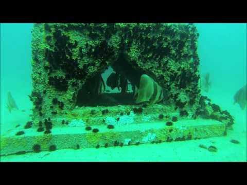 Bahrain Artificial Reef project February 2013