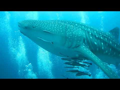 Kev in Thailand, Mermaids Dive Centre, Dive Day at Samae San Islands in Sattahip, Vlog 284