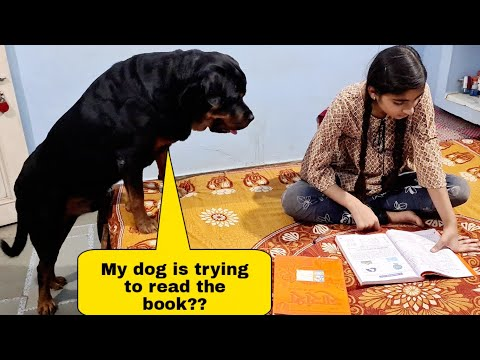 My dog needs a book|| jerry wants to play||funny dog videos.