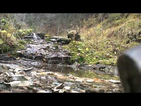 Romania - Nature Sounds - Mountain Spring - 1 hour 720p