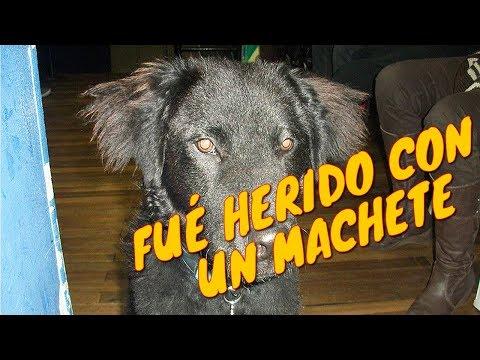 Coco: Un perrito rescadato en la Casa de la Juventud de los Mártires - CACMA| Tu Mascota TV