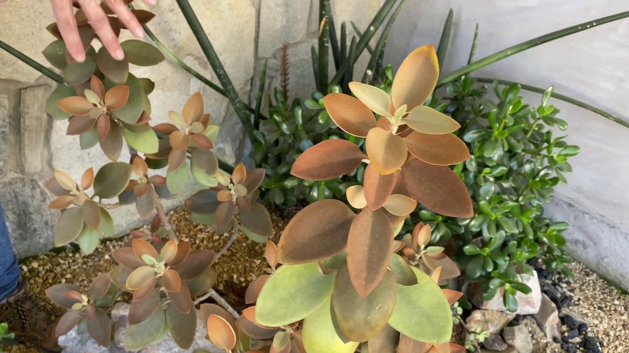Full Shade Succulents Youtube