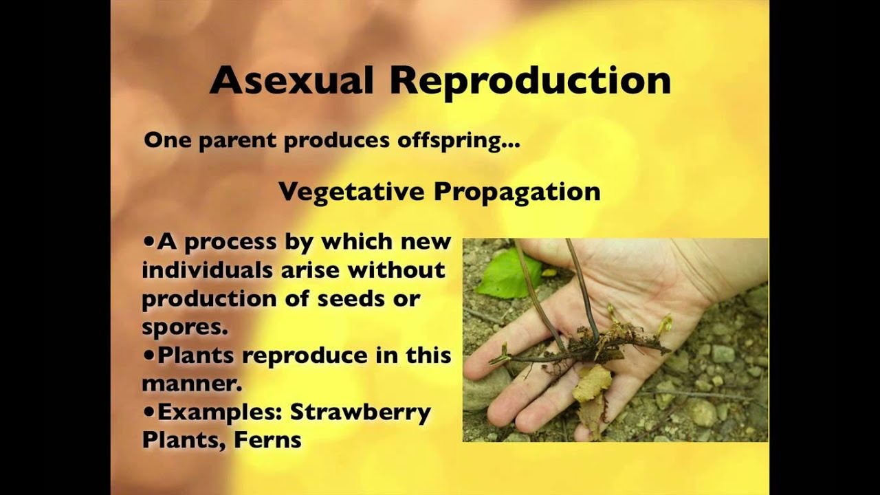 Plants reproduce asexually examples of figurative language