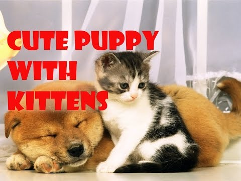 Funny cat video - Puppy with kittens