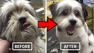 Best Dog Clippers - Top 5 Best Dog Clipper In 2019
