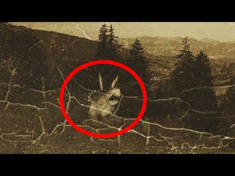 5 Most Mysterious Prehistoric Animals Spotted Alive Today