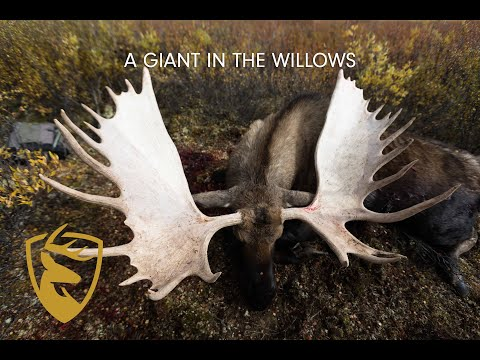 """WORLD-CLASS YUKON MOOSE In The Willows  Game Of Inches 
