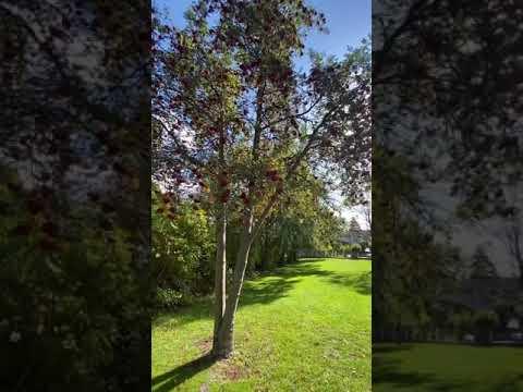 Mystery Tree in Northern MI