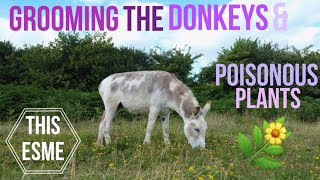 Vlog | Grooming the Donkeys & Poisonous Plants | This Esme