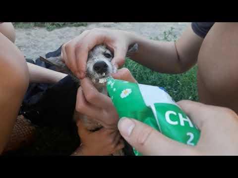 Вопрос: Как вылечить щенка от глистов?