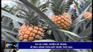 Xã Hà Long về đích nông thôn mới trước thời hạn