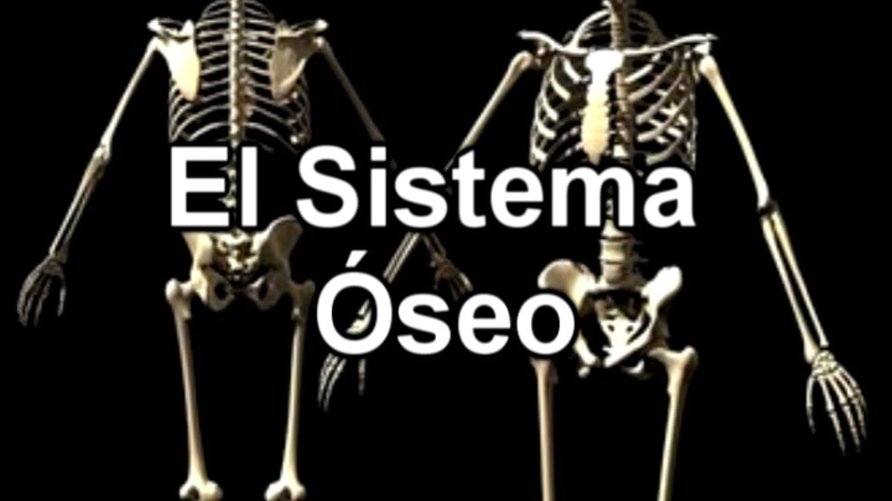 El Sistema Óseo - Documental de Biología - YouTube