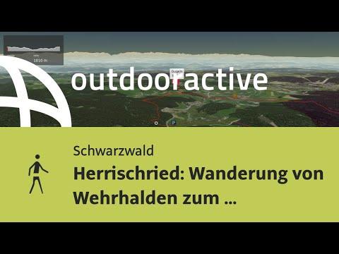 Wanderung im Schwarzwald:
