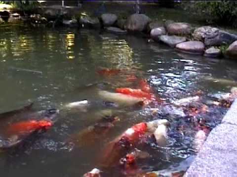El jard n japon s buenos aires youtube for Jardin japones