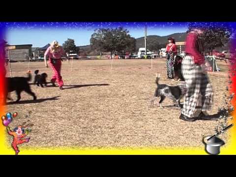 BDOC Dog Sports Demo Day Dances with Dogs Troupe Circus Demo