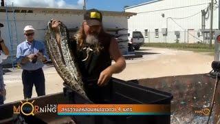 """ขนลุก! สหรัฐฯจับ""""งูเหลือมพม่า""""ยาวกว่า4เมตร"""