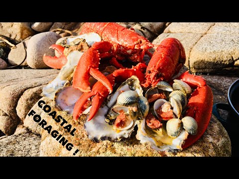 Coastal Foraging / Oysters , Lobsters And Clams / Cook Up On The Beach !