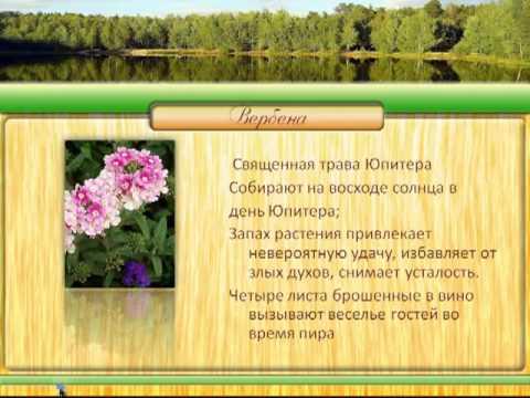 Магия растений. Вербена