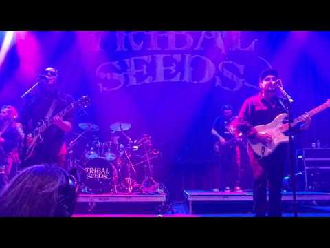 Tribal Seeds - Rude Girl live at the Brooklyn Bowl, Las Vegas 3/12/2017