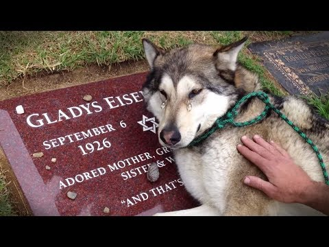TOP Animal Heartbreaking, Emotional/ Inspiring Will Melt Your Heart Compilation