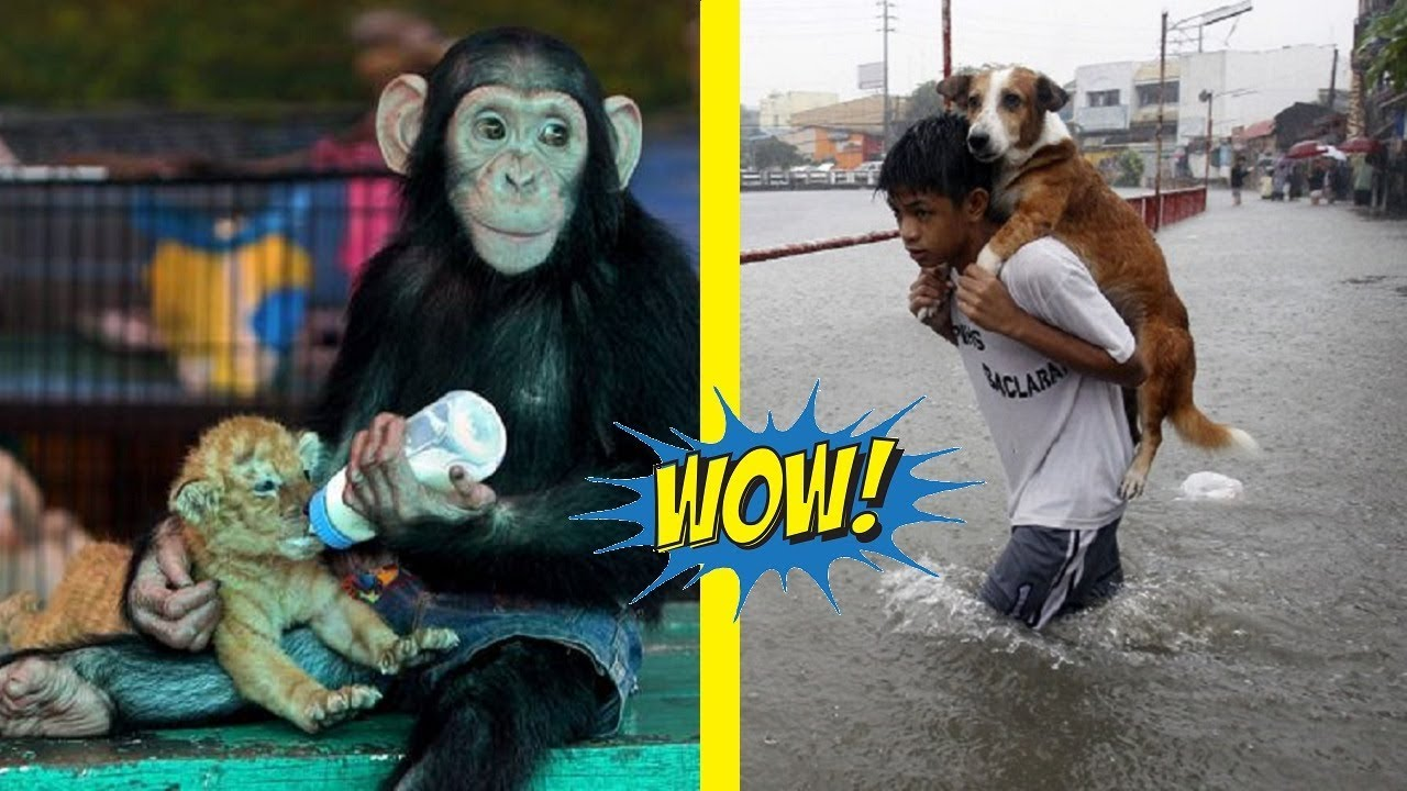 Amazing Animal Stories That Will Restore Your Faith In Humanity