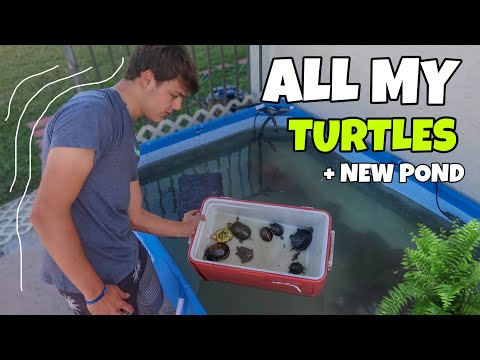 Bringing ALL My TURTLES + POND To NEW House!!!
