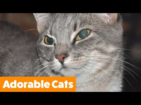 1 Hour of funny Cute Cats | Funny Pet Videos