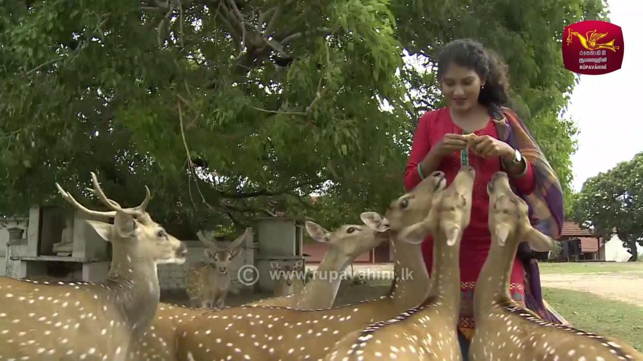 Sri Lanka Sää