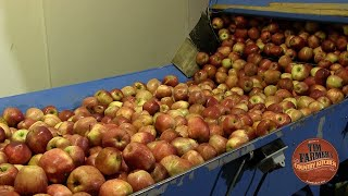 Evans Orchard - How to Make Apple Cider