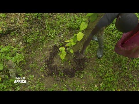 Made In Africa : Sur la route des épices