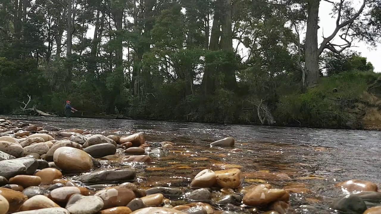 """Résultat de recherche d'images pour """"trout huon river tasmania"""""""