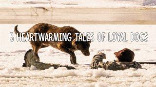 5 Heartwarming Tales Of Loyal Dogs