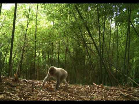 See the animal life thriving around Fukushima's exclusion zone