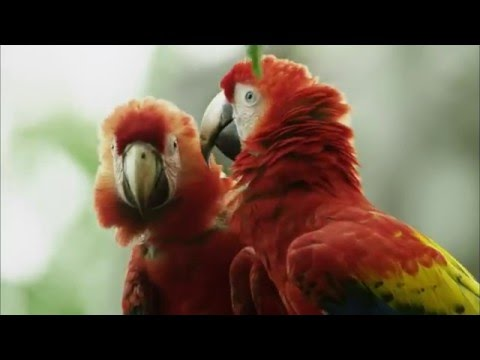 Parrot Confidential