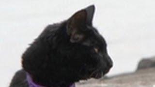 Incredible Jogging Cat | Must Love Cats