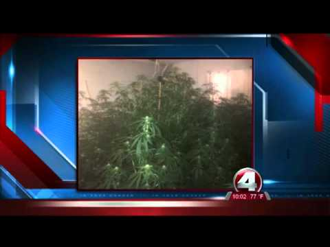 $500,000 worth of marijuana in Lehigh Acres homes