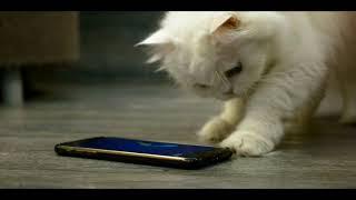 """Στο Mobile Internet μην είσαι """"γατάκι""""!"""