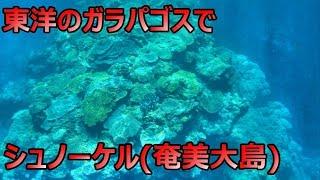 オッス、オラ、サッパ。これはオラが奄美大島の加計呂麻っていう離島に...