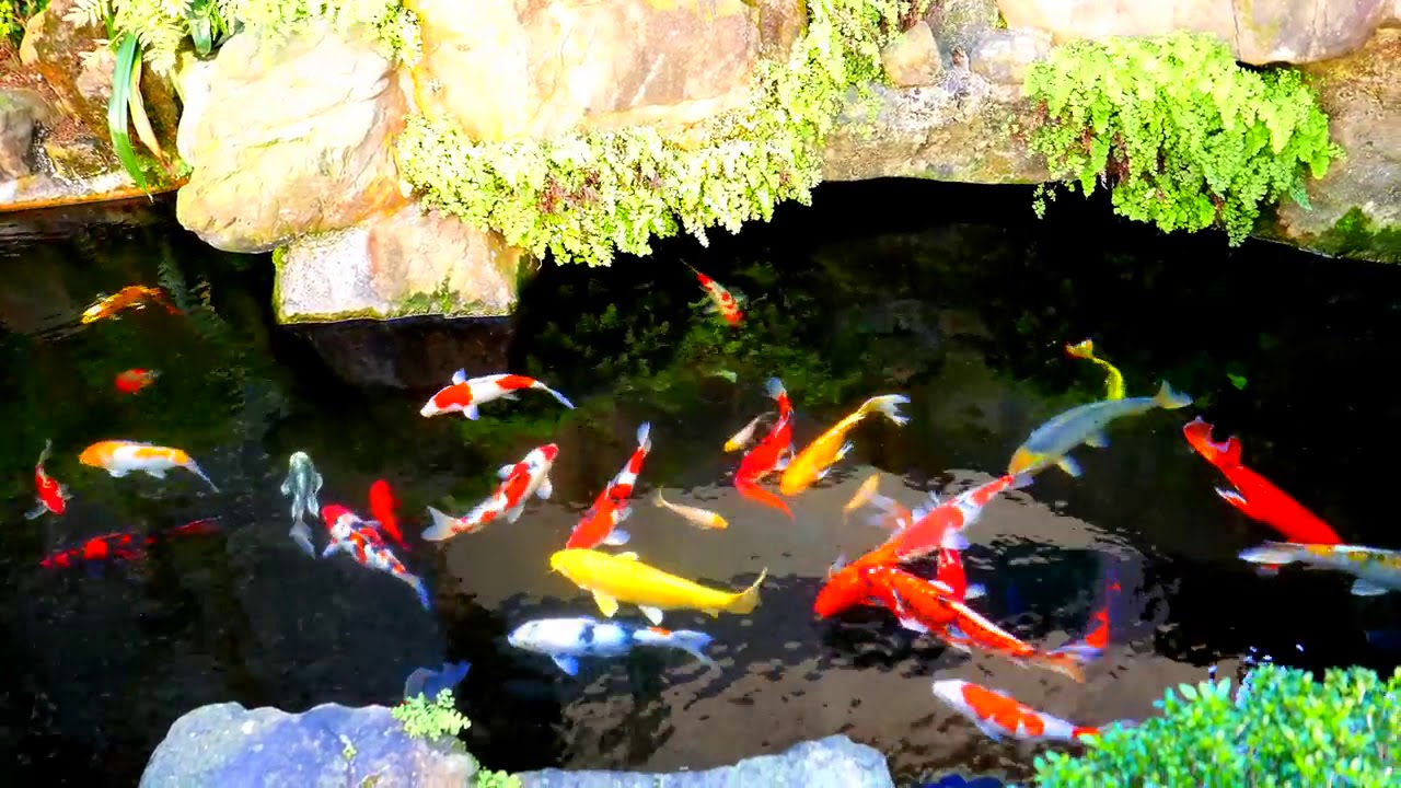 楓采汽車旅館入口處小魚池 - YouTube