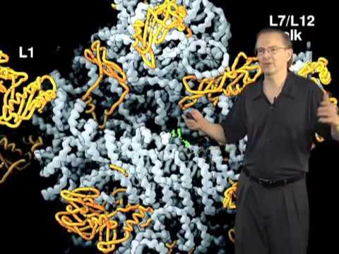 Szostak, Harvard RNA World Part 1  The Origin of Cellular Life