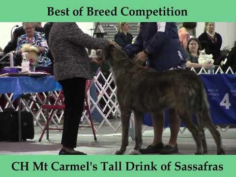 3-24-2019 Jackson TN Dog Fanciers Association - Irish Wolfhounds